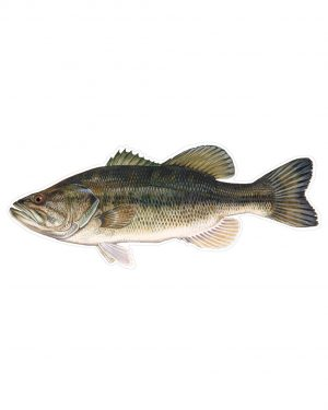 "Large Mouth Bass Magnet or Sticker for Indoor or Outdoor Use 9"" x 4"""