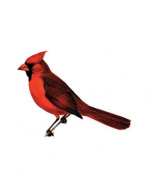 "Cardinal Magnet or Sticker for Indoor or Outdoor Use 7"" x 5"""