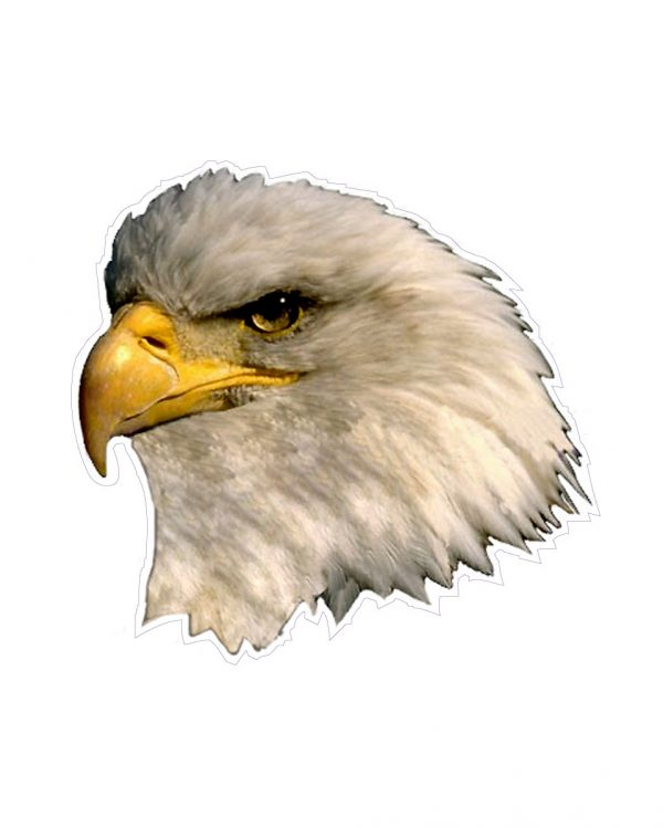 """Eagle Magnet or Sticker for Indoor or Outdoor Use 5"""" x 5"""""""