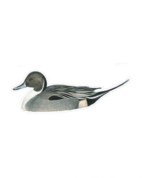 """Pintail Duck Magnet or Sticker for Indoor or Outdoor Use 8.5"""" x 4"""""""