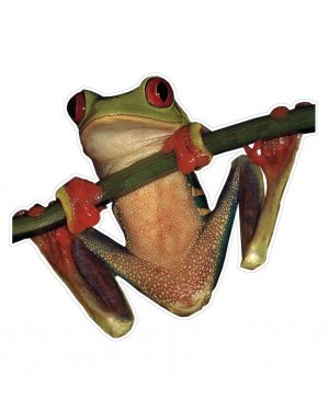 """Tree Frog Magnet or Sticker for Indoor or Outdoor Use 6"""" x 6"""""""