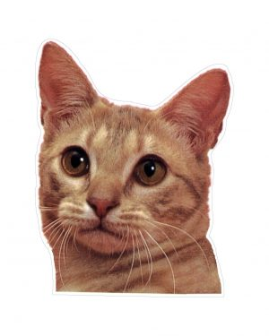 """Cat Magnet or Sticker for Indoor or Outdoor Use 6"""" x 4"""""""