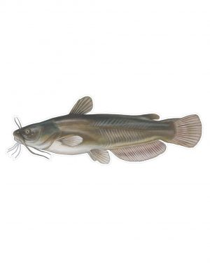 """Bullhead Magnet or Sticker for Indoor or Outdoor Use 6"""" x 7"""""""
