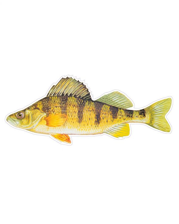 """Yellow Perch Magnet or Sticker for Indoor or Outdoor Use 7"""" x 3"""""""