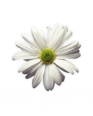 "Daisy Magnet or Sticker for Indoor or Outdoor Use 5"" x 5"""