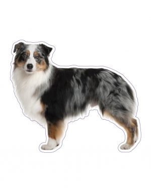 "Australian Shepherd Magnet or Sticker for Indoor or Outdoor Use 6"" x 5"""
