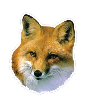 "Fox Magnet or Sticker for Indoor or Outdoor Use 5"" x 6"""