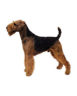 "Airedale Terrier Magnet or Sticker for Indoor or Outdoor Use 6"" x 5"""