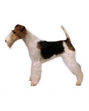"Fox Terrier Magnet or Sticker for Indoor or Outdoor Use 6"" x 5"""