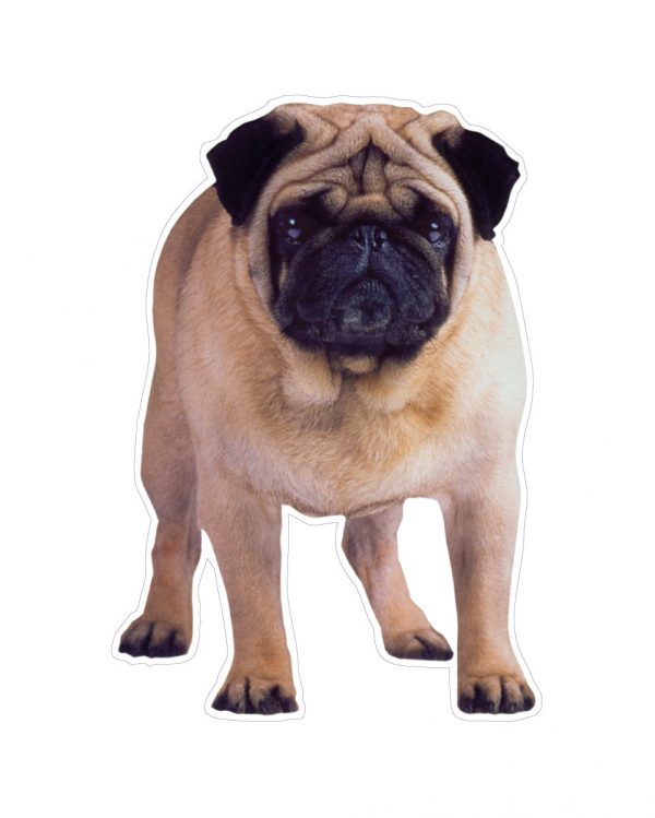 """Pug Magnet or Sticker for Indoor or Outdoor Use 4"""" x 6"""""""