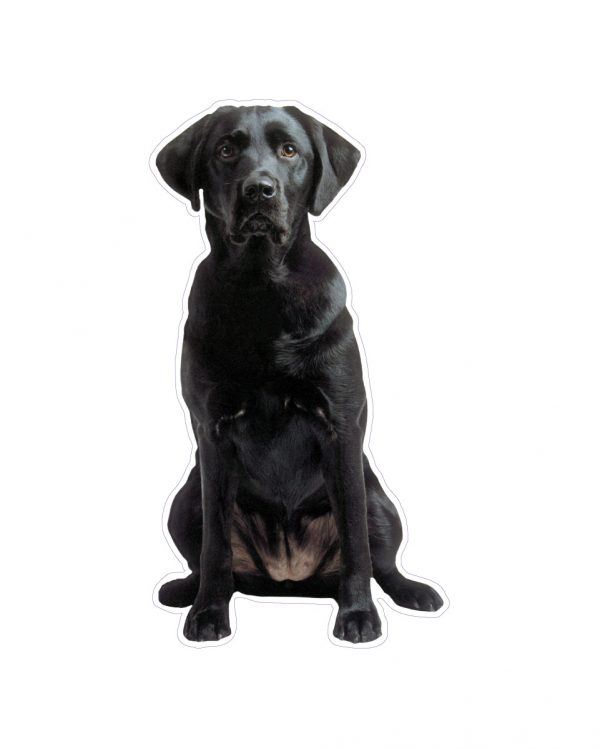 """Black Lab Magnet or Sticker for Indoor or Outdoor Use 6"""" x 4"""""""