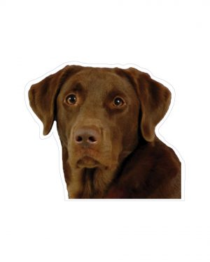 "Chocolate Lab Magnet or Sticker for Indoor or Outdoor Use 5"" x 4"""