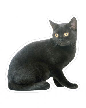 "Black Cat Magnet or Sticker for Indoor or Outdoor Use 5"" x 5"""