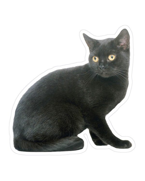 """Black Cat Magnet or Sticker for Indoor or Outdoor Use 5"""" x 5"""""""