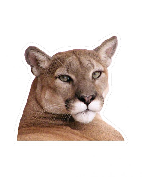 """Cougar Magnet or Sticker for Indoor or Outdoor Use 4"""" x 4"""""""