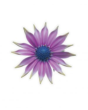 """Purple Flower Magnet or Sticker for Indoor or Outdoor Use 5"""" x 5"""""""