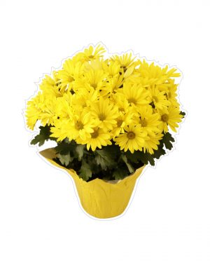 "Yellow Flower Bouquet Magnet or Sticker for Indoor or Outdoor Use 6"" x 6"""