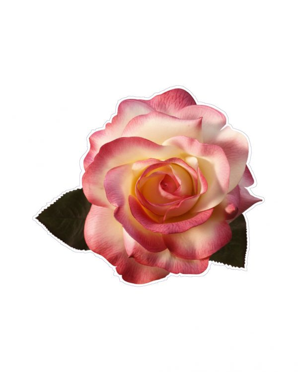 """Rose Magnet or Sticker for Indoor or Outdoor Use 5"""" x 4"""""""