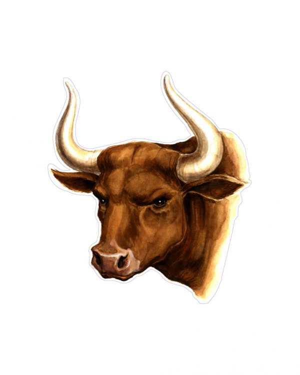 """Bull Magnet or Sticker for Indoor or Outdoor Use 6"""" x 7"""""""