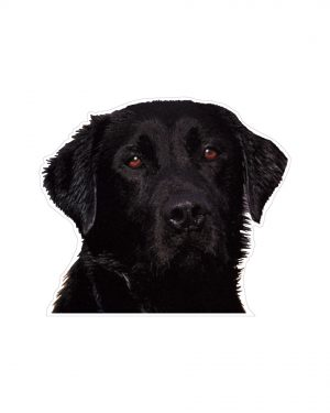 "Black Lab Magnet or Sticker for Indoor or Outdoor Use 5"" x 5"""
