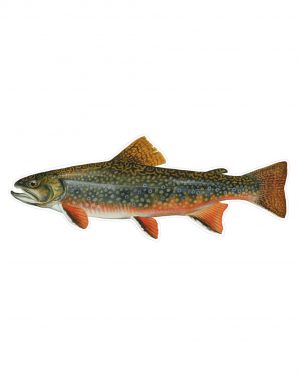 "Brook Trout Magnet or Sticker for Indoor or Outdoor Use 9"" x 3"""