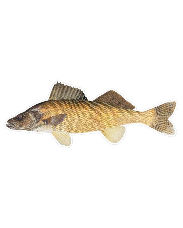 """Walleye Magnet or Sticker for Indoor or Outdoor Use 9"""" x 3.6"""""""