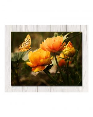 Butterfly Wall Canvas-Available in 4 Sizes