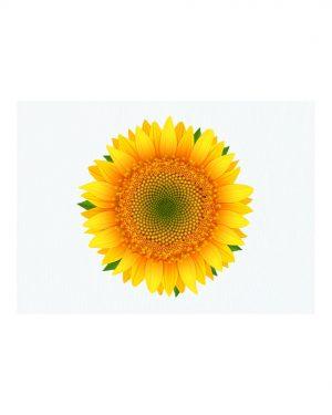 Sunflower Canvas Flat Panel